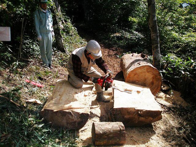 風倒木でベンチ作り