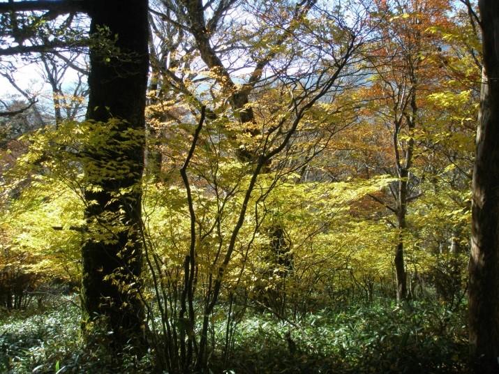 紅葉の自然林