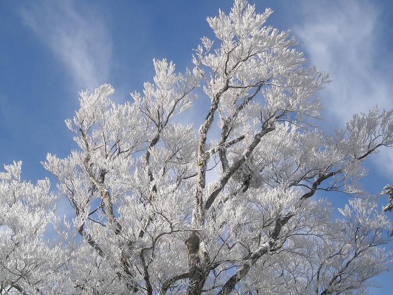 成就地区の霧氷/1月~3月