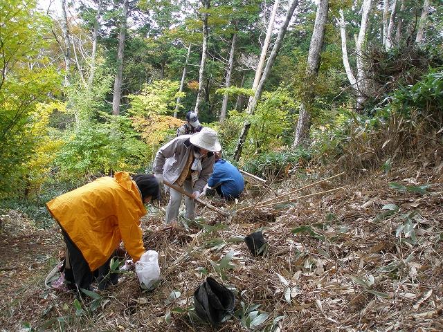 秋には、成就地区周辺の森や登山道で森林保全活動をしたりと・・・(^^)