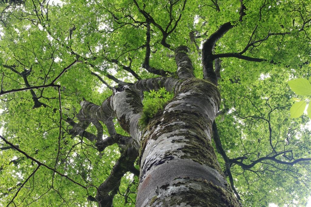 イベント情報ー千年の森をつくる会よりーの画像