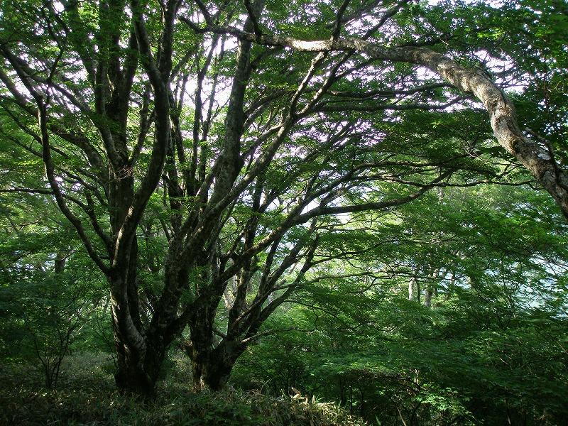 イベント情報ーNPO森からつづく道よりーの画像