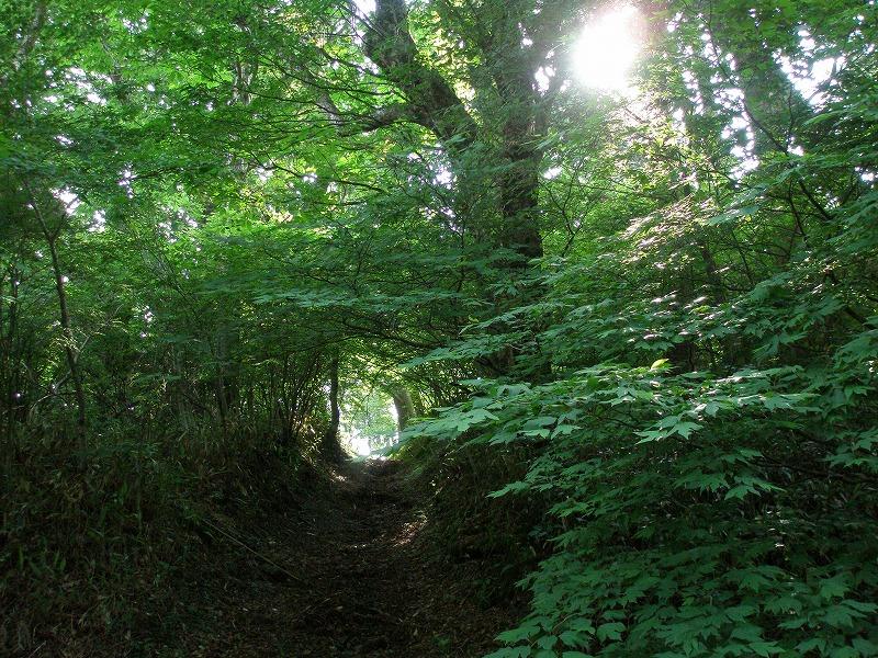 イベント情報-えひめ千年の森をつくる会より-の画像