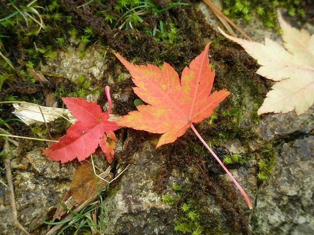 日時変更/イベント情報~えひめ千年の森をつくる会より~の画像