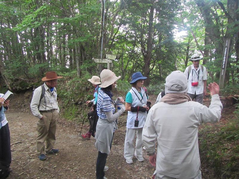石鎚森の学校2018夏 ブナの森の自然観察会催行報告の画像