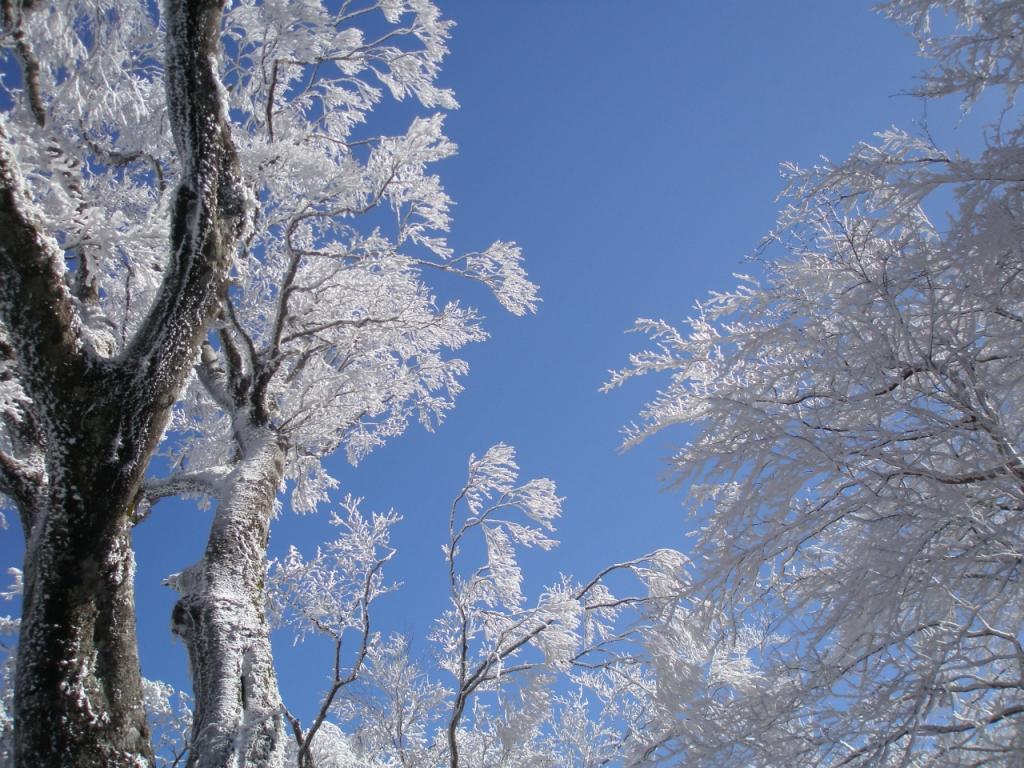 イベント情報/石鎚森の学校2019☆冬☆氷点下の森の自然観察&雪遊びの画像