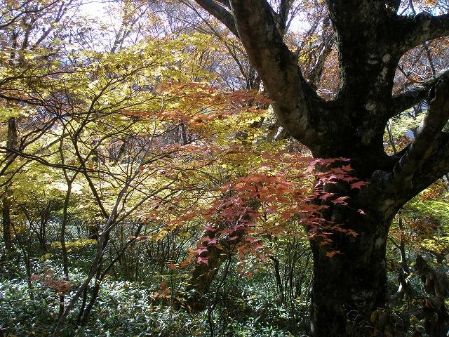 イベント告知/えひめ千年の森をつくる会よりの画像
